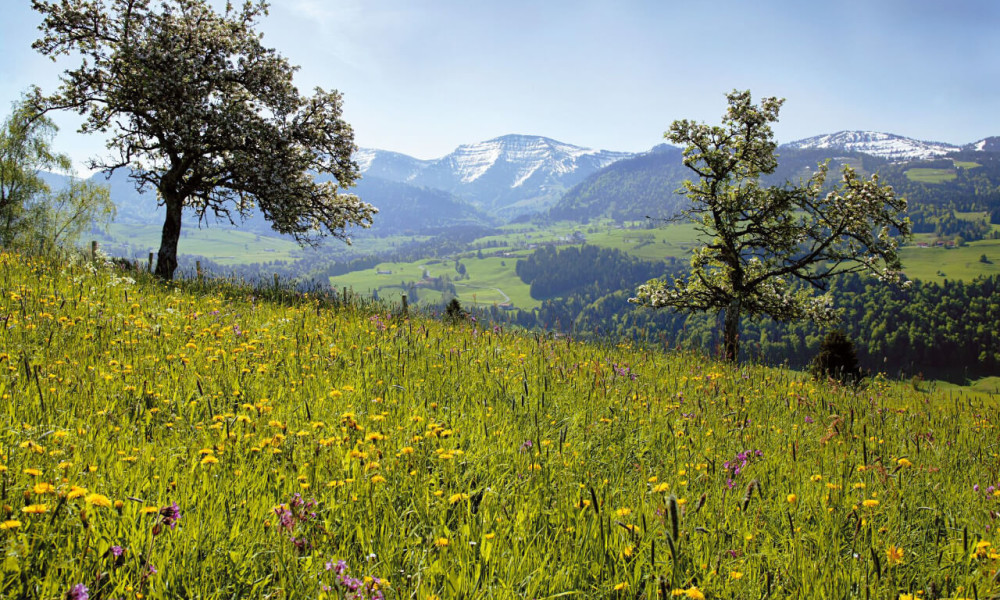 Oberstaufen-Frühling